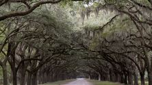 Spanish Moss Covered Trees, Savannah, Georgia, United States
